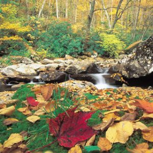 falls leaves near brook or spring
