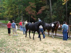 Equine Interaction Experience