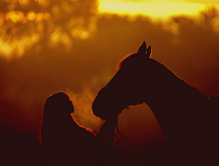 Equine Program - holistic addiction treatment center - tennessee drug rehab