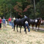 several horses and people outdoors - Equine Interaction Experience - English Mountain Recovery