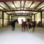 3 horses inside barn or stable - Equine Interaction Experience - English Mountain Recovery