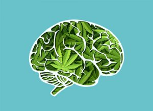 illustration of brain made of marijuana leaves - marijuana addiction