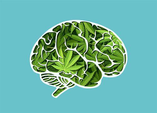 illustration of brain made of marijuana leaves - marijuana addiction